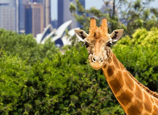 Taronga Zoo لونا بارك سيدني