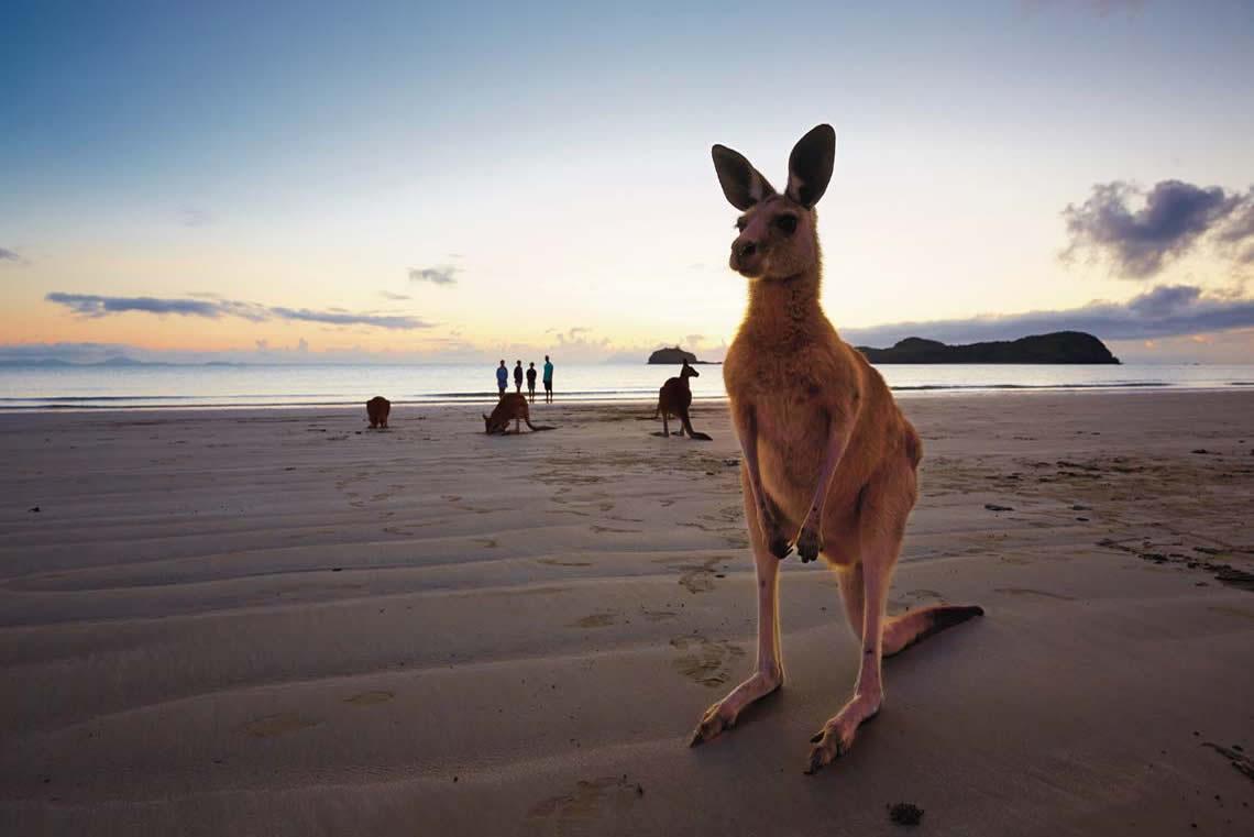 ماكاي، كوينزلاند Mackay, Queenslan السياحة في استراليا 2016