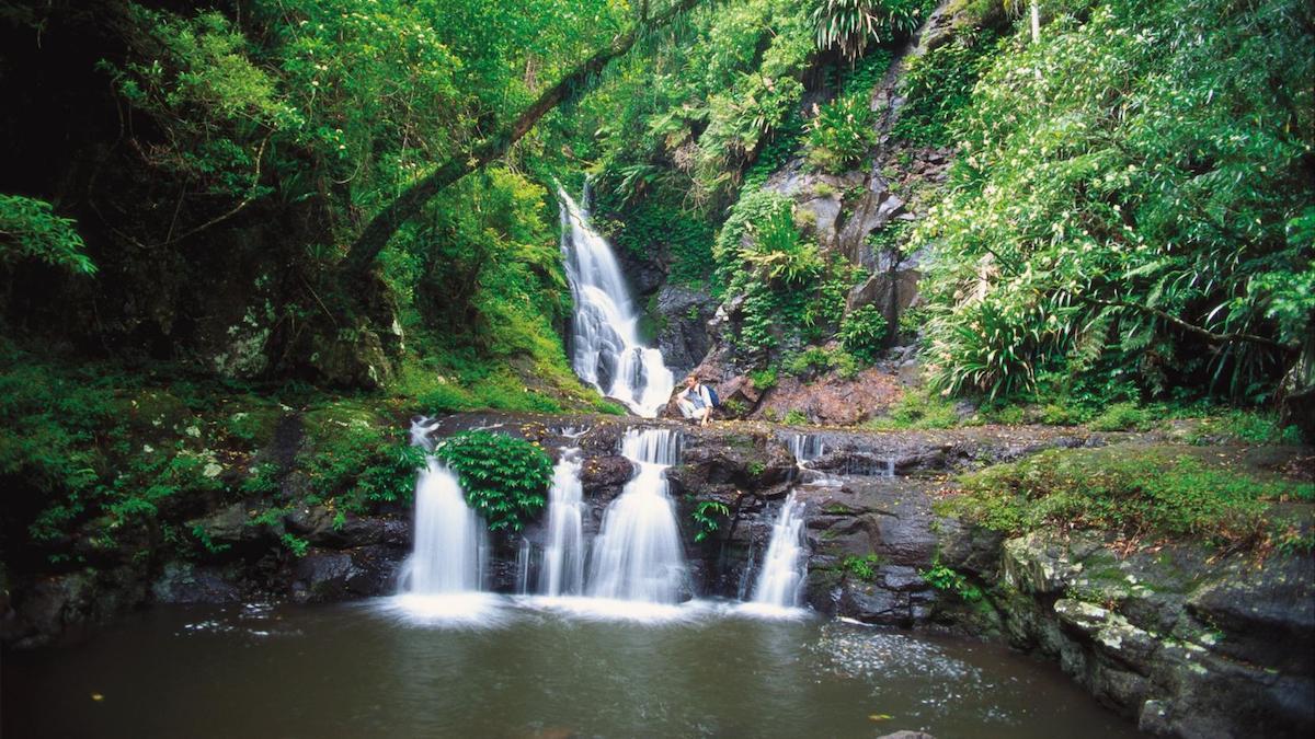 الغابات في جولد كوست افضل برنامج سياحي في استراليا