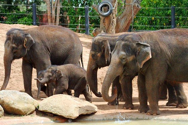 حديقة حيوان ملبورن Melbourne Zoo