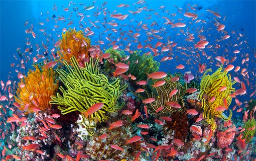 الحياة البحرية التنوعة في الحاجز المرجاني العظيم
