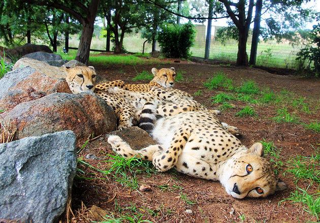 حديقة الحيوان الوطنية و متحف الأحياء المائية -National Zoo and Aquarium