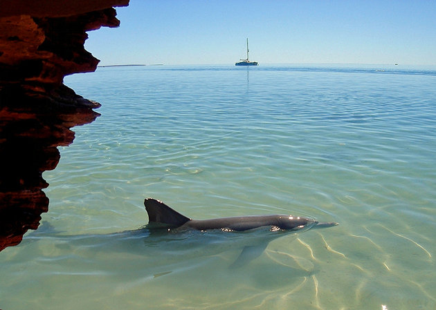خليج شارك باي أند مونكي ميا Shark Bay and Monkey Mia